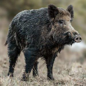 Agricultores y cazadores valencianos piden la declaración de la caza como actividad esencial