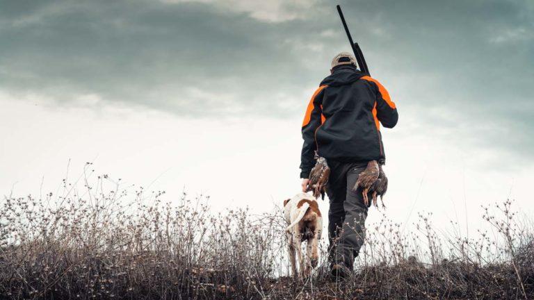 Cazador cazando perdices salvajes en solitario. @ Ángel Vidal
