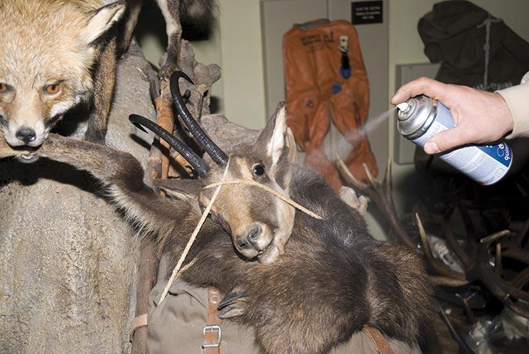 como conservar trofeo de caza taxidermia