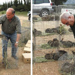 Cómo construir tu propio criadero de conejos para repoblar tu coto con ellos