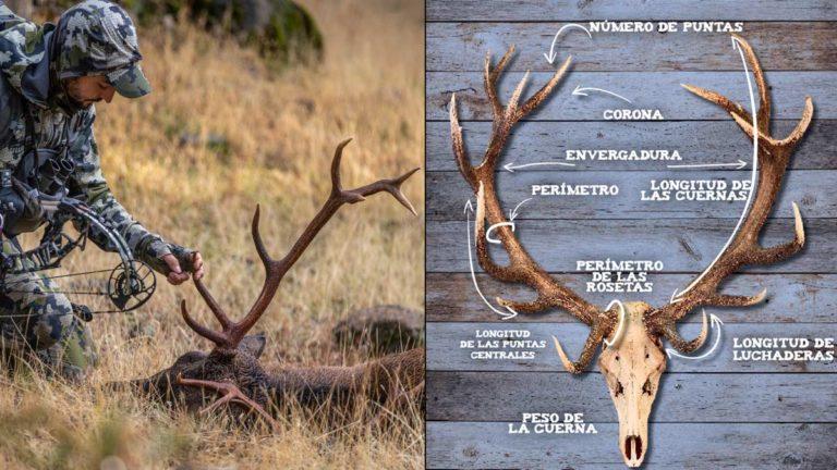 Trofeo de ciervo. @Pedro Ampuero y Shutterstock