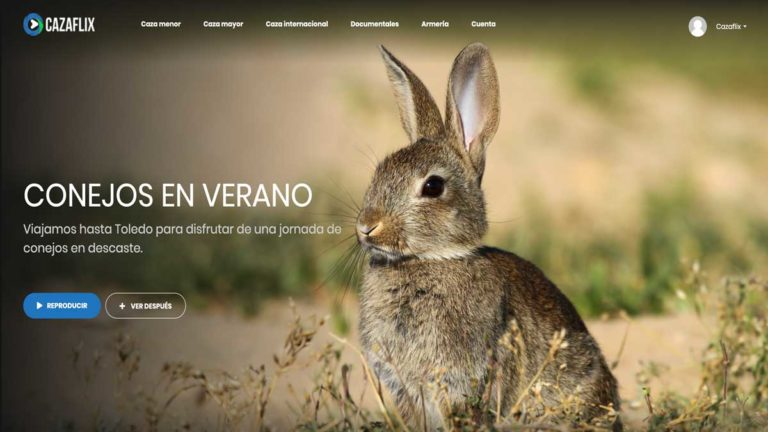conejos cazaflix