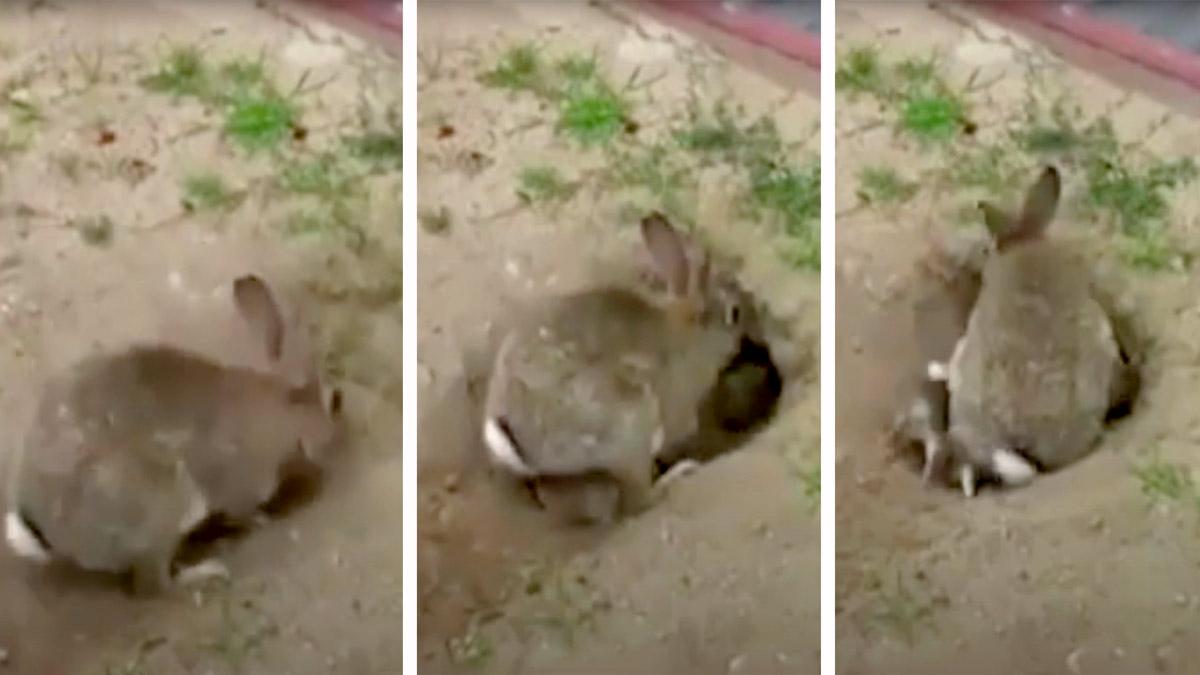 Un conejo empieza a escarbar en el suelo y destapa un tesoro