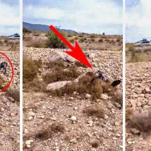 Un perro de caza muestra a un conejo y cuando salta sorprende a todos por su color