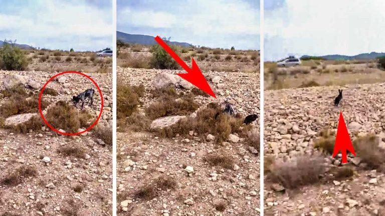 El conejo huye del lugar en el que el perro hace la muestra. © YouTube