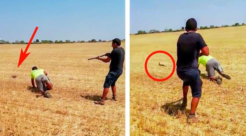 Este lance a un conejo a 'perro puesto' arranca las carcajadas de los cazadores