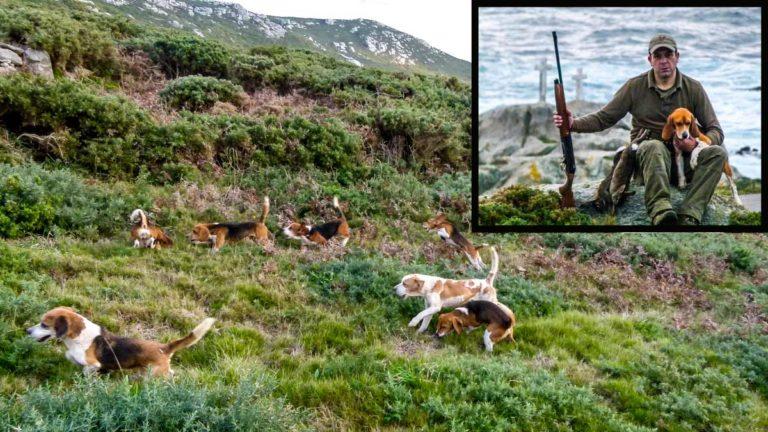 El autor con sus beagles durante una cacería de conejos. © Innova Ediciones