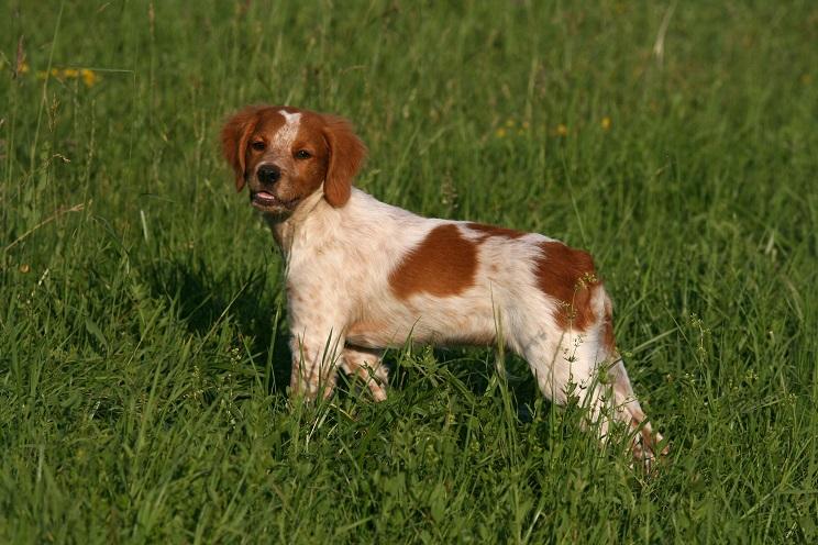 El Congreso modificará el Código Civil para que los animales se consideren seres vivos y no cosas