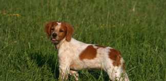 rabos perros