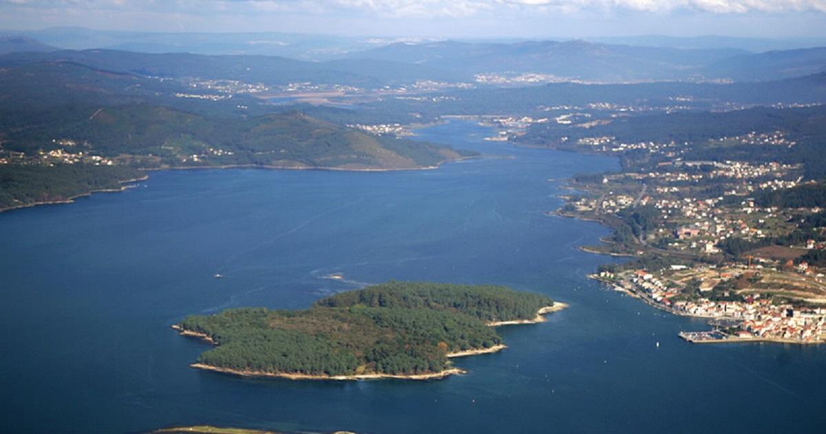 Los jabalíes ponen en peligro la biodiversidad de una isla en Galicia