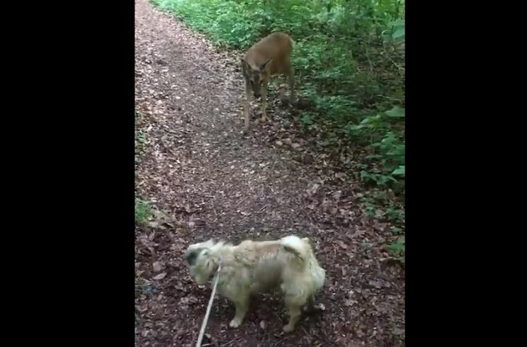 Una urbanita se acerca a una corza con su perro y se lleva un buen rapapolvo