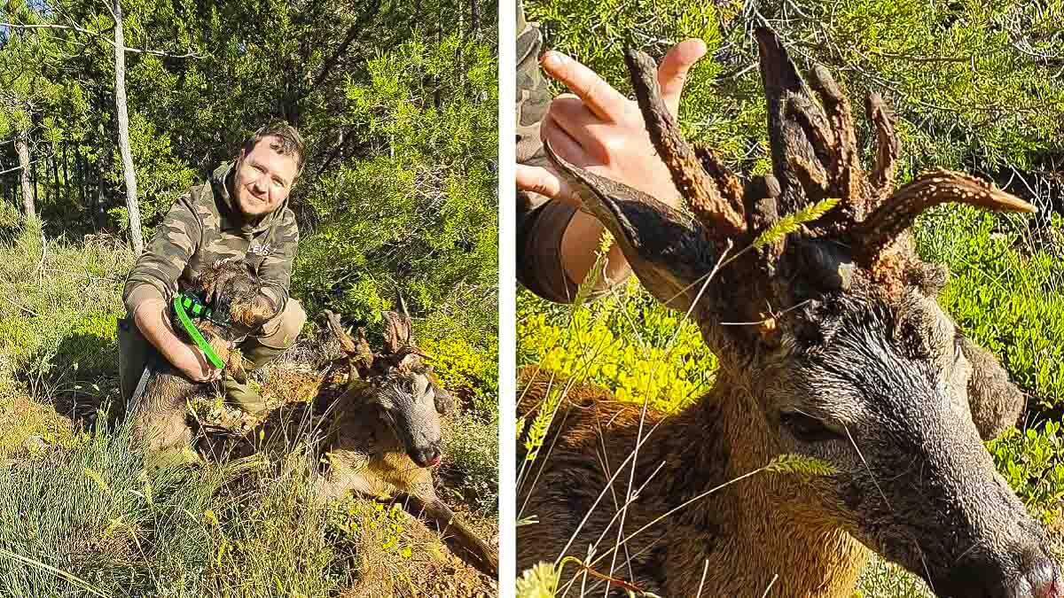 Cazado un corzo con una rarísima cuerna de 10 puntas en Burgos