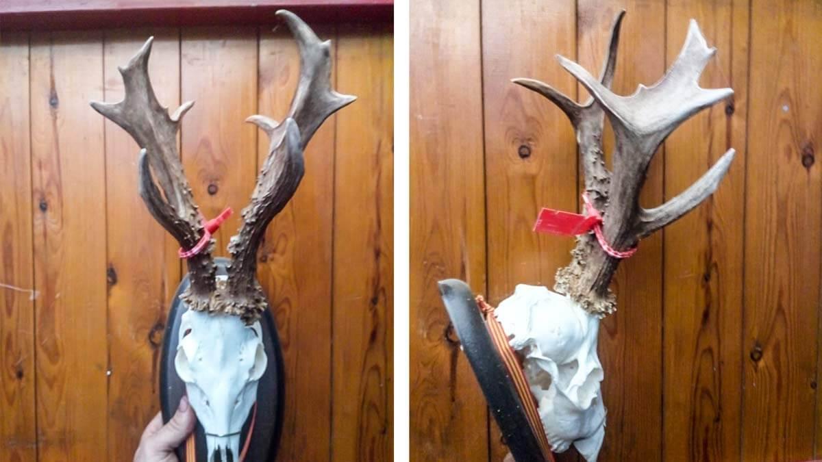 Un veterano cazador abate un corzo bestial de 11 puntas casi 200 puntos