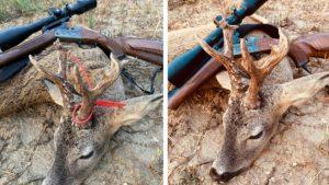 Caza uno de los corzos más raros de la temporada en Burgos