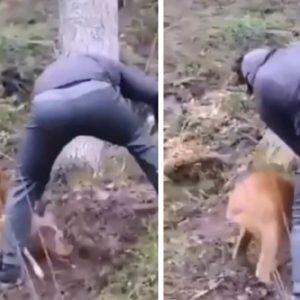 Un corzo ataca a un hombre con una violencia inusitada