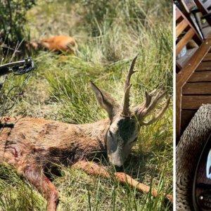 Un joven cazador logra atraer y cazar a un extraño corzo con su arco