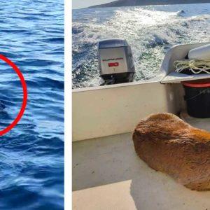 Un cazador y pescador rescata un corzo en el mar a 800 metros de la orilla en San Sebastián