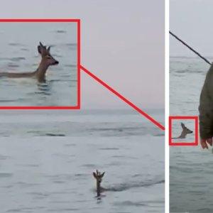 Está pescando en el mar cuando ve a un extraño animal nadar hacia la orilla... ¡es un corzo!