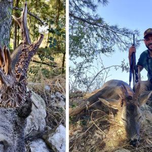 Le envían fotos de un increíble corzo por WhatsApp y meses después lo caza