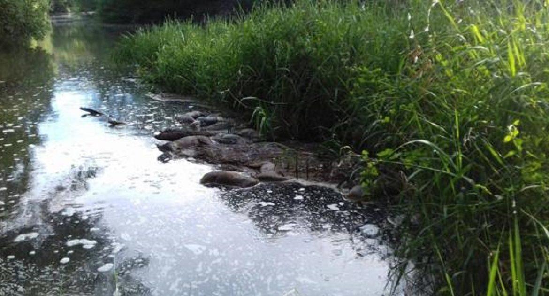 Encuentran más de veinte corzos ahogados en un canal en Valladolid