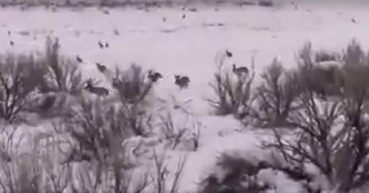 El coto con más liebres del mundo