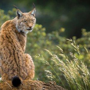 La Junta de Andalucía excluye a los cazadores de la celebración del 50 aniversario de Doñana