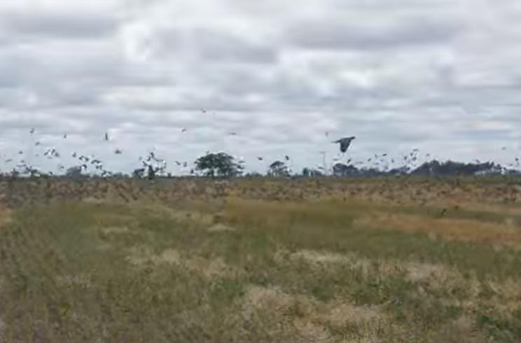 Tres espectaculares cotos de palomas para disfrutar de la media veda