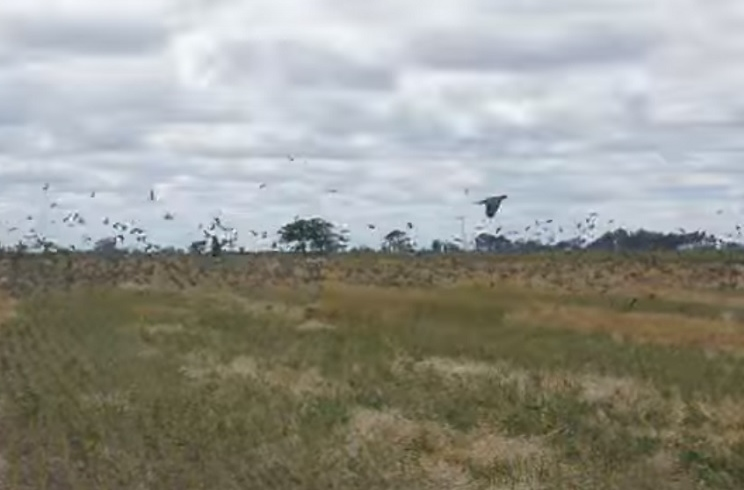 cotos de palomas