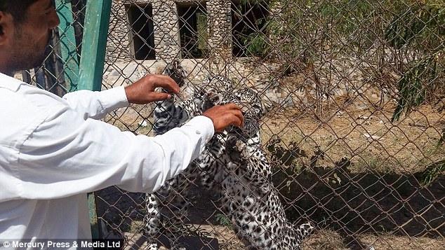 Una campaña creada en redes sociales trata de salvar a los animales.