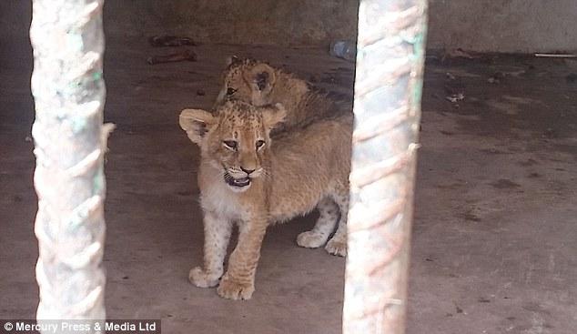 Hay unos 280 animales que sobreviven en lamentables condiciones.