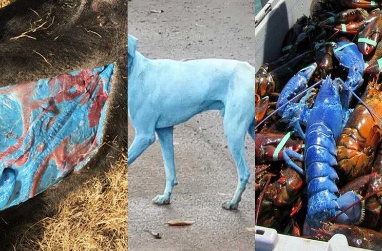 Tres criaturas azules que no sabías que existen
