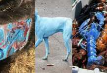 criaturas azules