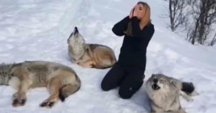 Críticas a Telecinco por mostrar a una mujer aullando con lobos troquelados como si fueran salvajes
