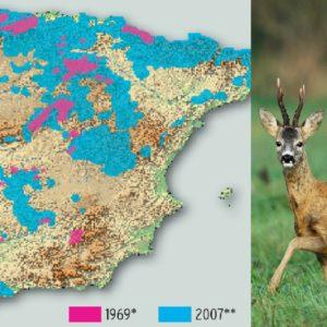 ¿Cuántos corzos hay en España?