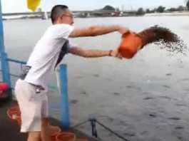 cubos comida peces.
