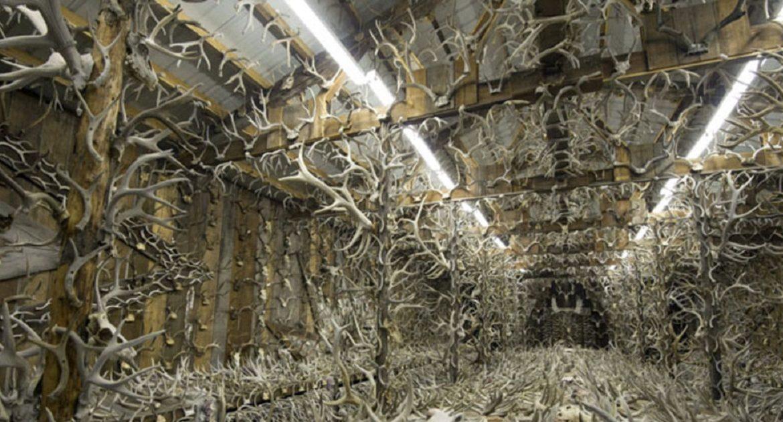 Esta casa alberga más de 15.000 cuernas de ciervos