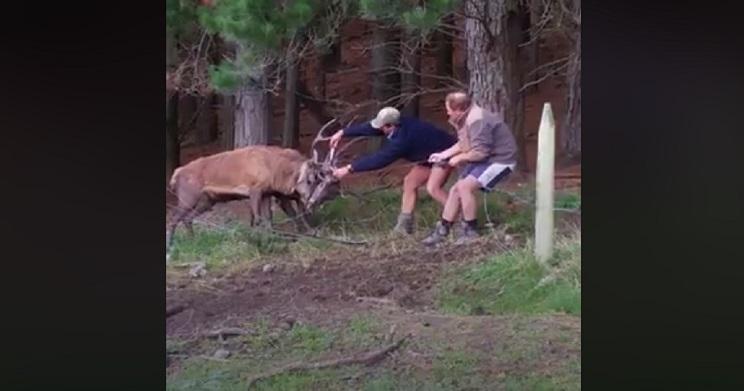 Dos cazadores se la juegan para rescatar a dos ciervos con sus cuernas enredadas