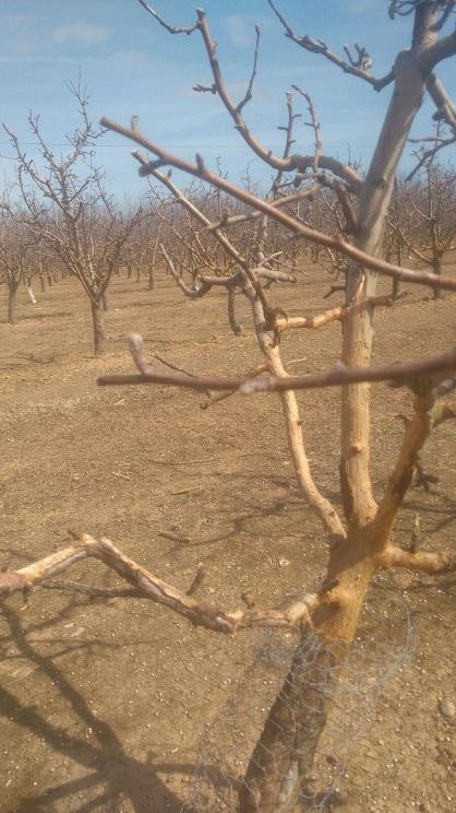 daños en cultivos