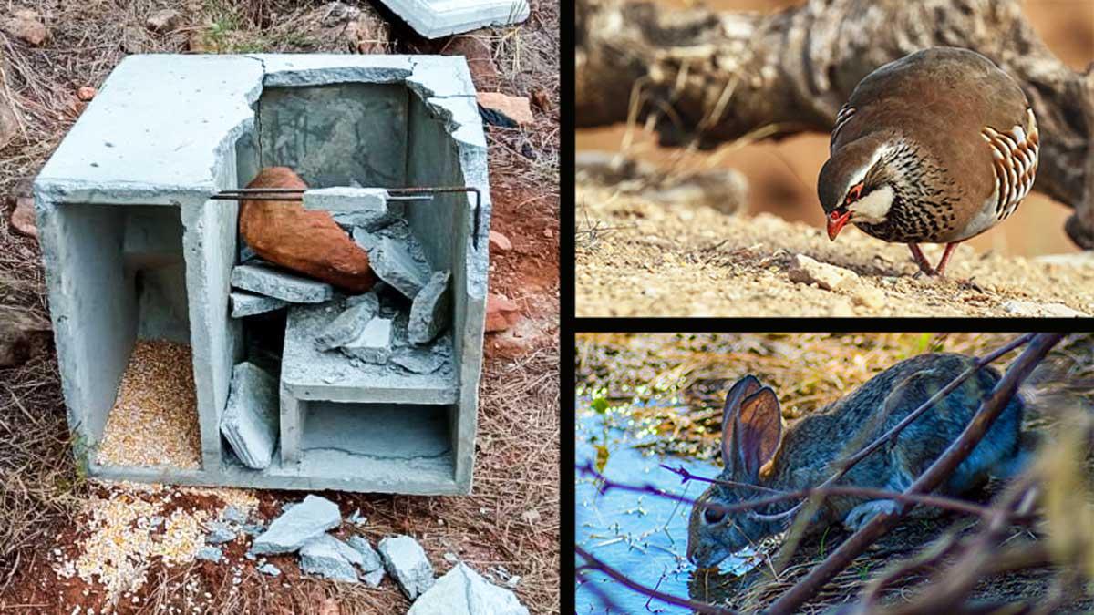 Destrozan comederos y bebederos puestos por cazadores para alimentar a la fauna salvaje en Castellón