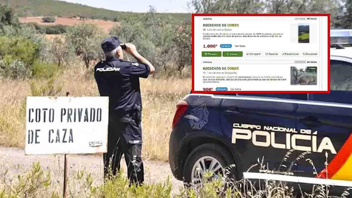 Dos detenidos por estafar a cazadores vendiendo recechos de corzo y puestos de montería