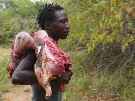 dieta rica en carne de caza