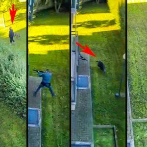 Dispara a un jabalí en un núcleo urbano rodeado de vecinos y el vídeo se hace viral