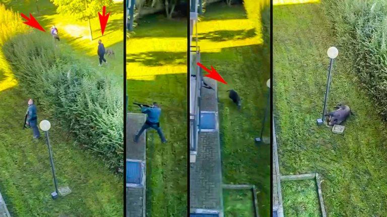 Momento en el que el policía dispara al jabalí. @YouTube