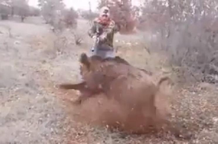 disparo a jabali
