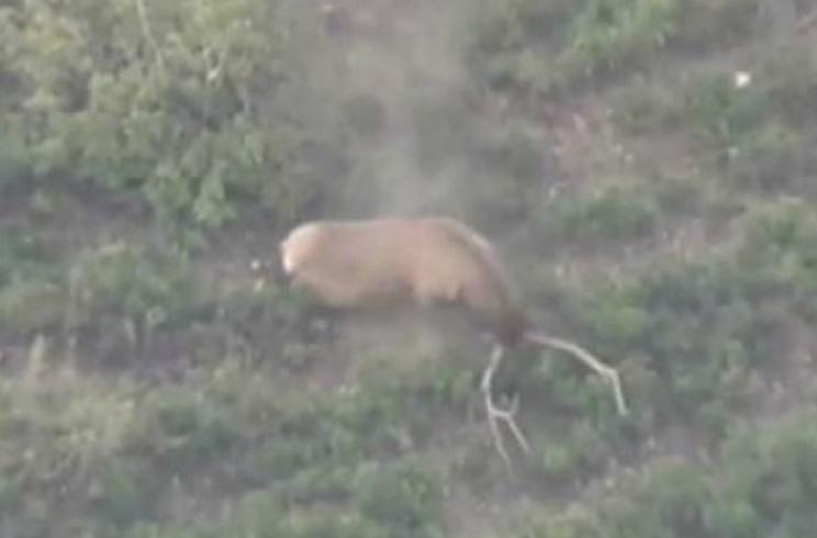 disparo a un ciervo