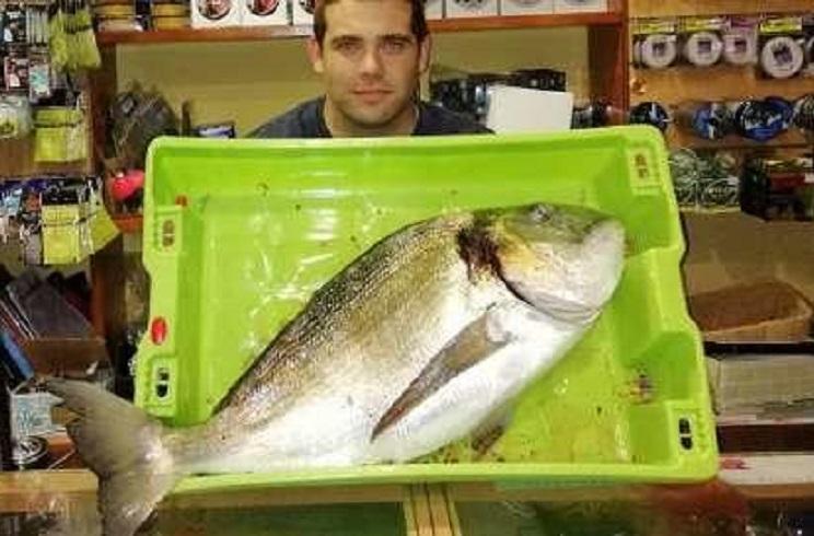 Capturan en Asturias una dorada ¡de seis kilos!