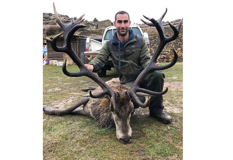 Caza un gran ciervo de cuerna oscura en una modesta montería en abierto