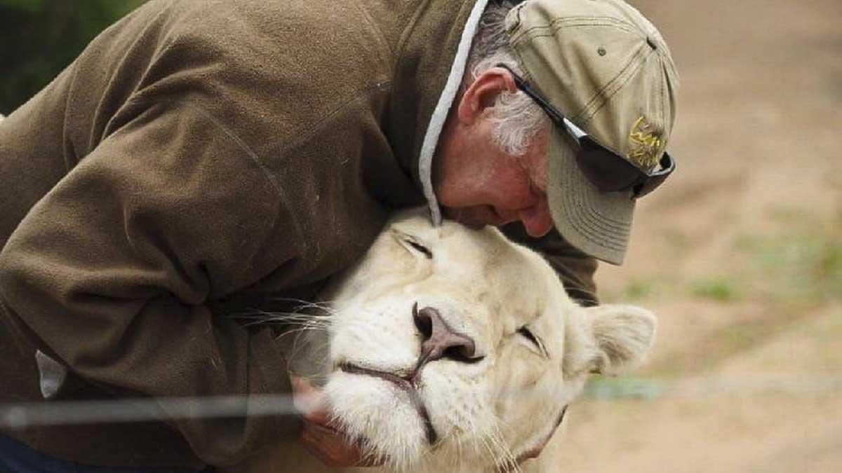 Dos leonas matan a un ecologista en presencia de su mujer