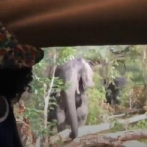 Un elefante carga en Botsuana contra un bus repleto de turistas