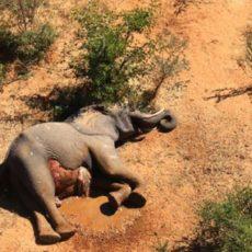 Encuentran la causa de la muerte de cientos de elefantes en Botsuana (y no, no fueron los cazadores)